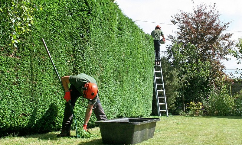 Hedge Trimming - Dibden Purlieu, Hampshire