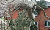 Photo of Emergency Tree Works - Southampton, Hampshire