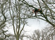 Arborist Rob leans out to remove a piece of deadwood from over the campsite thumb