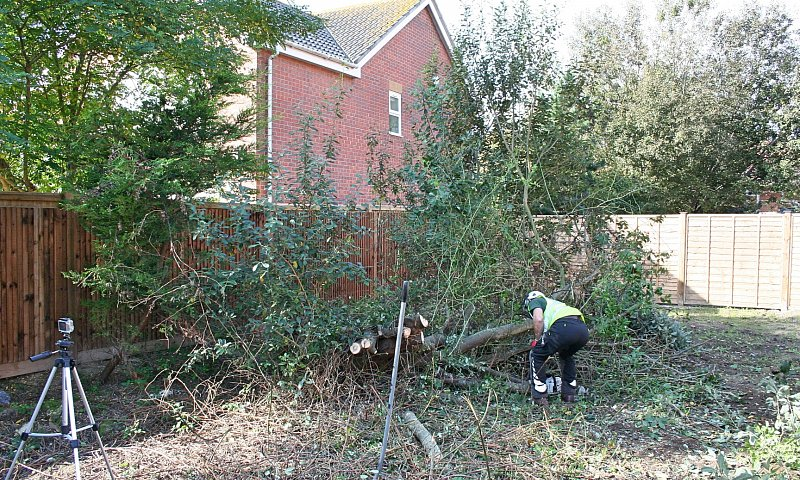 Tree Felling and Site Clearance - Chichester, West Sussex