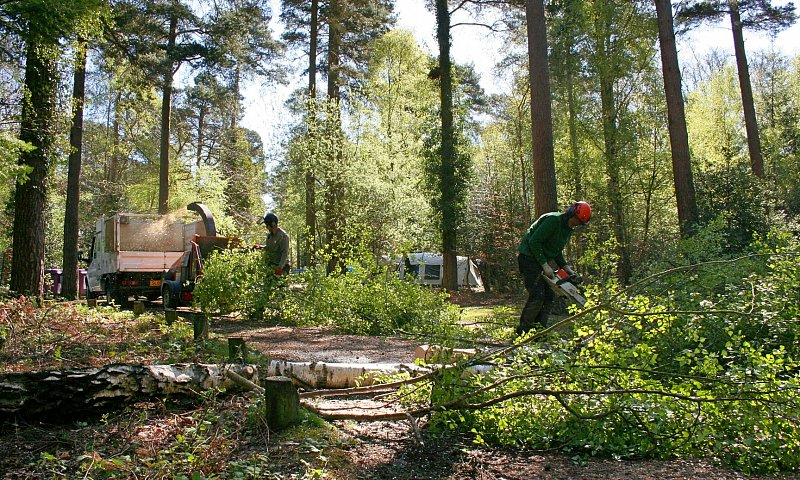Tree Felling - New Forest, Hampshire