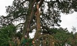 Photo of Emergency Tree Works - Dibden, New Forest