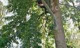Photo of Utility Arboriculture - New Forest, Hampshire