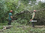 All of these works were a combination reducing and clearing storm damaged trees thumb