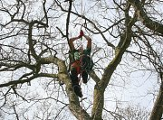 Arborist Rob uses his SRT climbing system to access the trees crown thumb