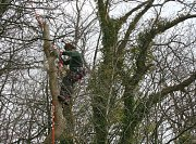 Arborist Ed continues to dismantle in small sections to reduce the dangers faced with working on a steep hill thumb