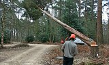 Photo of Tree Felling - New Milton, Hampshire