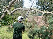 Team Leader Sam removes small sections to reduce the total weight of the fallen tree thumb