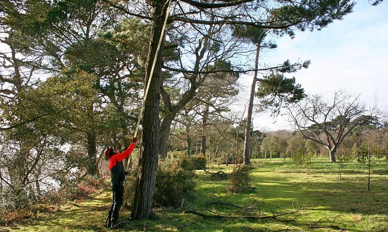 Deadwooding - Pine - Lepe
