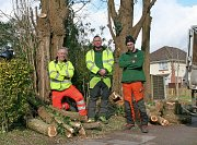From left to right, Team Leader Kevin, Arborist Sam and Arborist Rob thumb
