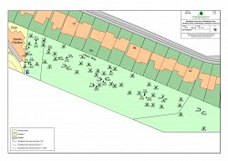 Example Tree Condition Survey Map