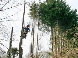 Tree Felling - Ringwood thumb