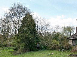 Site Clearance - Fordingbridge thumb