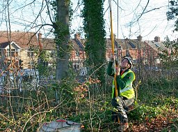 Arborist Tom Wilkinson using the Long Shot to set his line in this Beech Tree thumb
