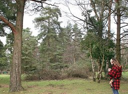 Tree Consultancy - Brockenhurst, New Forest thumb