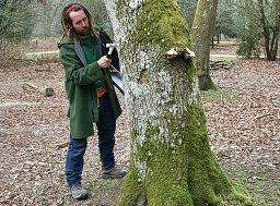Consultant Oliver Lower performing a knock test for this Forestry Commission Tree Survey thumb