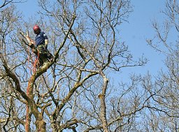 Utility Arborist Ashley Taylor working on a Sectional Fell for Scottish & Southern Electric thumb
