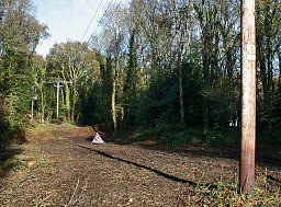 Site Clearance - Ringwood thumb