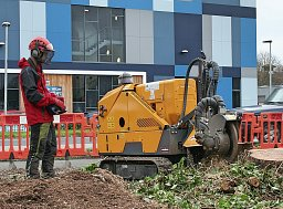 Stump Grinding - Basingstoke thumb