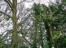 Tree Removal - Exbury, New Forest thumb