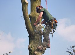 Tree Felling - Dibden thumb