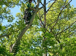 Arborist Jez working on this roadside sectional dismantle thumb