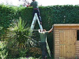 Our domestic department has extensive experience trimming and shaping all types of hedge thumb