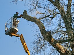 Oak - Crown Reduction - Brockenhurst, New Forest thumb
