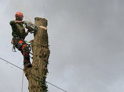 Tree Felling - Waterlooville, Hampshire thumb