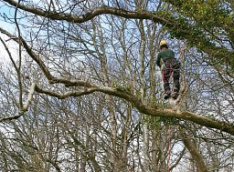 One of our Arborists working on a Sectional Fell for this Forestry Commission managed tree thumb