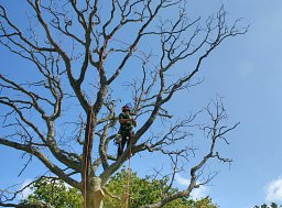 Tree Felling - Whitely thumb