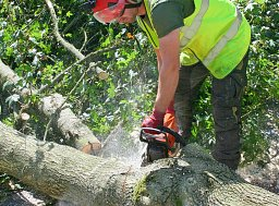Tree Felling - West End thumb