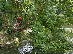 Tree Felling - Southampton, Woodmill Lane thumb